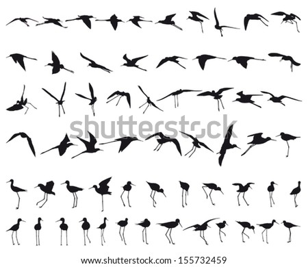 Sixty Black-winged Stilts flying and standing black silhouettes - stock vector