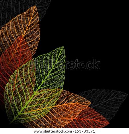 Skeleton leaf background  - stock vector