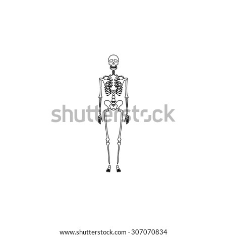 skeletons human bones outline black simple stock vector 307070834, Skeleton