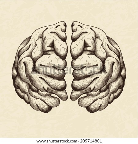 Sketch illustration of human brain - stock vector