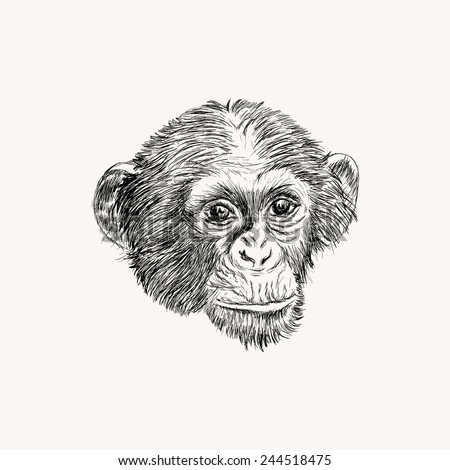 Sketch monkey face. Hand drawn doodle vector illustration. - stock vector