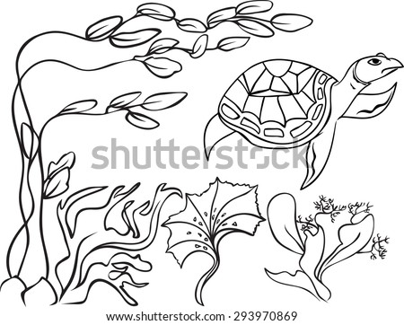 Sketch, natatorial turtle in underwater world