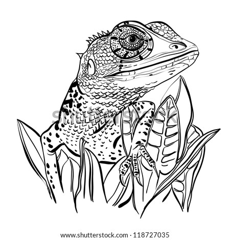 Sketch of a lizard sitting on a leafs on a white background - stock vector