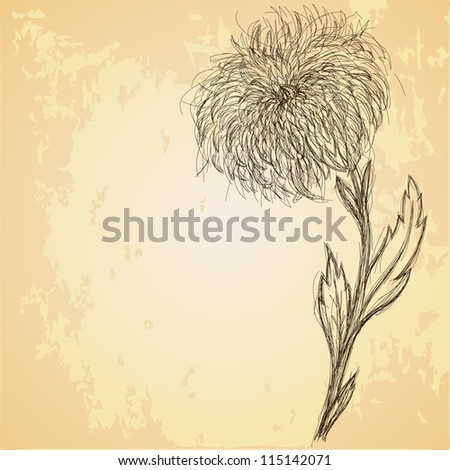 Sketch of chrysanthemum flower on grungy texture