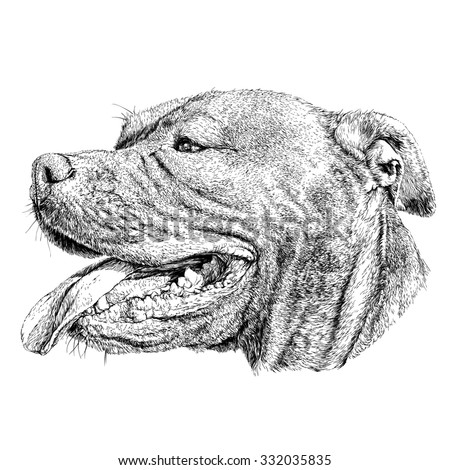 Sketch of Dog Pit bull terrier. Vector Illustration