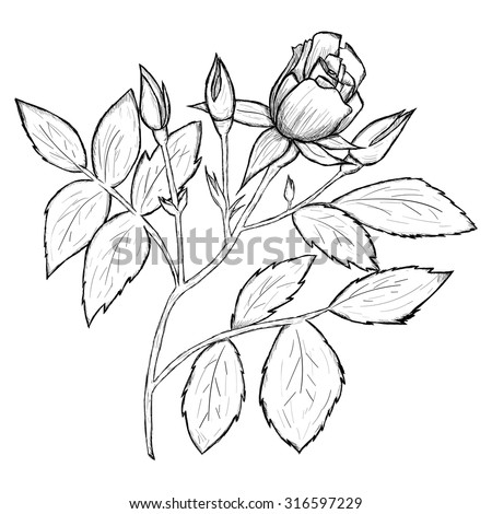 Sketch of flower by hand on an isolated background