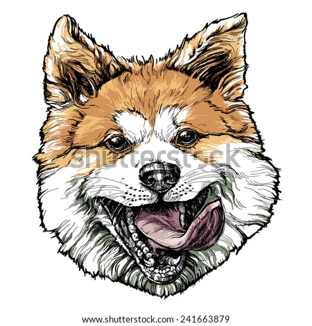 Sketch of funny Akita dog. vector illustration. - stock vector