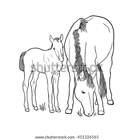 Sketch of horse and foal isolated on white background. Art vector illustration - stock vector