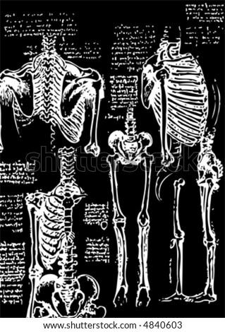sketch of some bones, vector black - stock vector