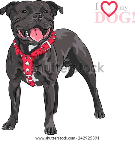 Sketch of the black dog Staffordshire Bull Terrier breed in red pinch collar - stock vector