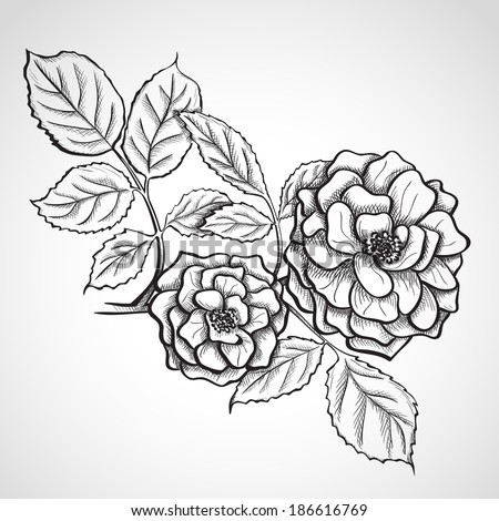 Sketch rose branch, hand drawn, ink style - stock vector