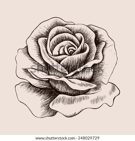 Sketch rose. Hand drawn realistic flower vector illustration - stock vector