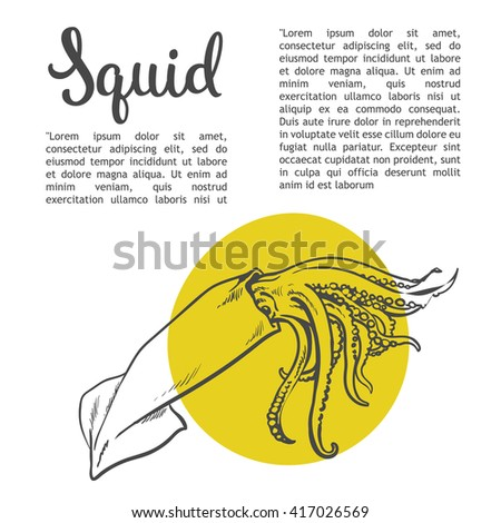 Sketch squid, vector illustration drawn by hand on a white background, isolated squid, sea food concept for the menu, advertising, sales brochures with information inscription lettering Squid - stock vector