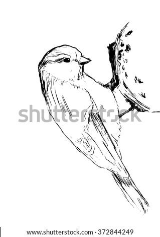 Sketch tit bird. Vector illustration - stock vector