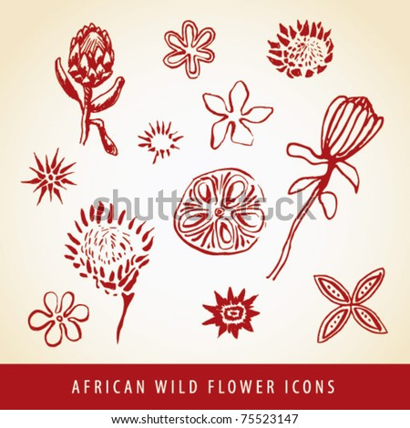 Sketched vector collection of African wild flower icons and illustrations
