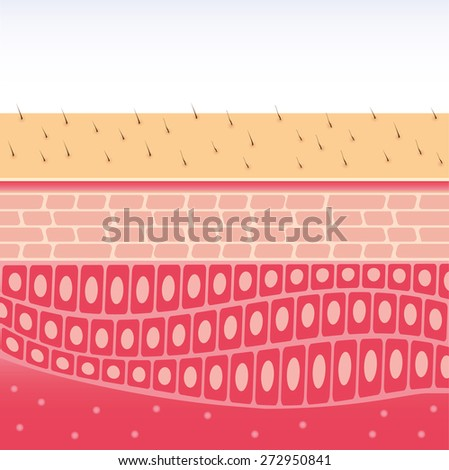 skin cross-section anatomy medical vector illustration  - stock vector