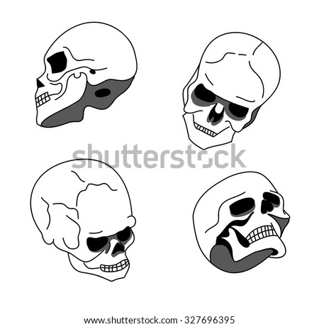 skull in different positions  isolated on white background vector