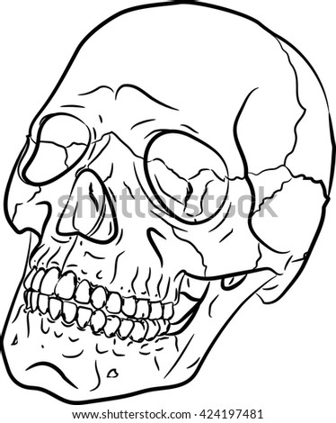 Skull is hand-drawn, black and white sketch,vector illustration - stock vector