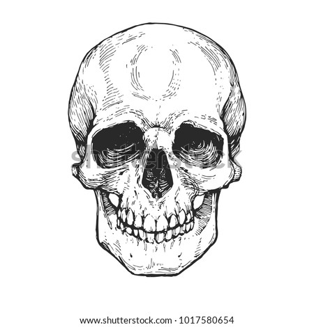 skull skeleton head anatomy ink hand stock vector royalty free
