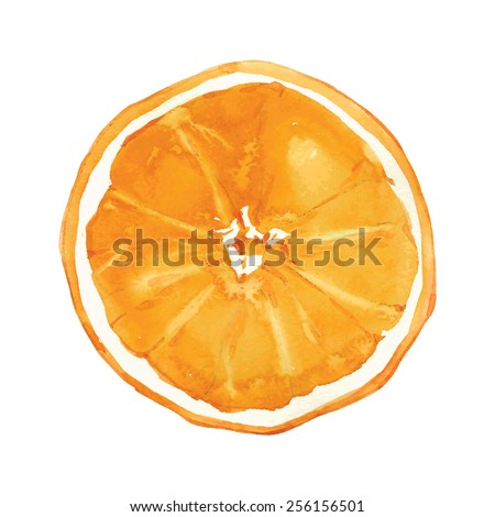 slice of orange drawing by watercolor, hand drawn vector illustration - stock vector