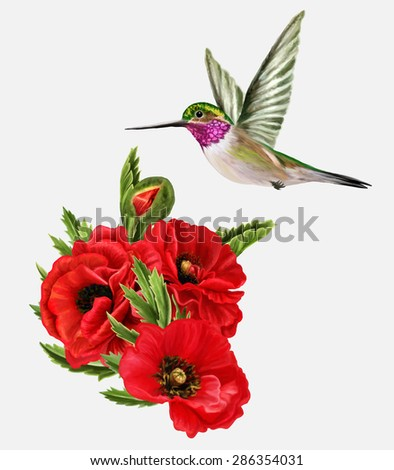 small bird hummingbirds and red poppies