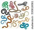 snake set isolated on white....
