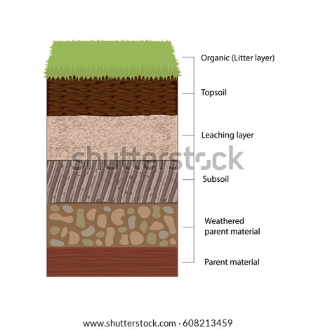Soil Cross Section Stock Images Royalty Free Images