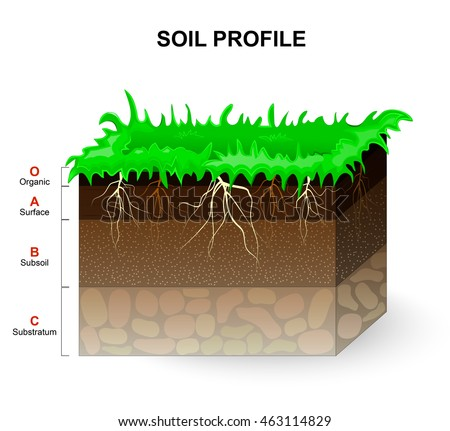 Soil Profile and Soil horizons. Piece of land with green grass and plant roots. Vector illustration.