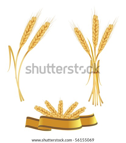 Some ears of wheat and ribbon. Vector. - stock vector