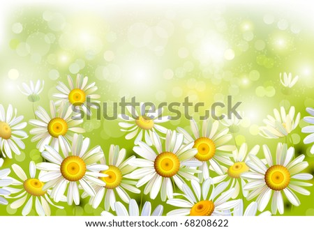 some realistic chamomiles on the  green glade - stock vector