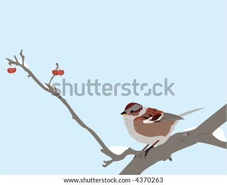 Song sparrow in winter - stock vector