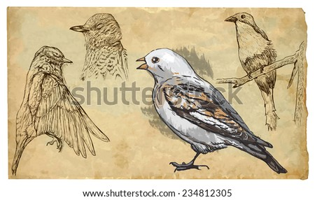 SONGBIRDS. Collection of an hand drawn illustrations (originals, no tracing). Drawings are editable in layers and groups. The color layers are separated. - stock vector