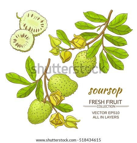 guanabana fruit for sale healthy fresh fruit desserts