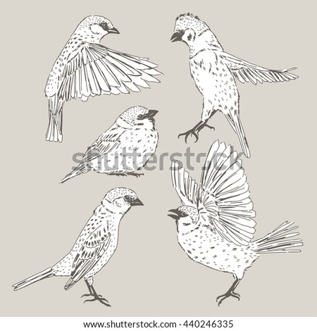 sparrow bird set, sketchy zoological collection