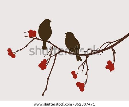 sparrows on the mountain ash branch - stock vector