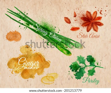 Spices herbs set drawn watercolor blots and stains with a spray star anise, parsley, spring onion, ginger root  on kraft paper - stock vector