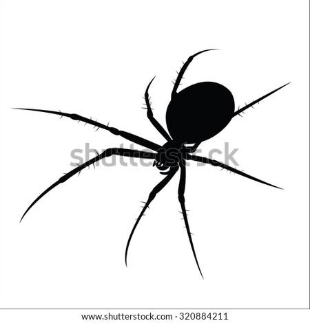 Spider - stock vector