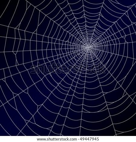 Spider's web. Vector. - stock vector