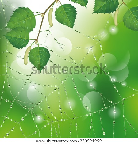 Spider web with dew and leaves of birch. Nature background. Vector illustration - stock vector