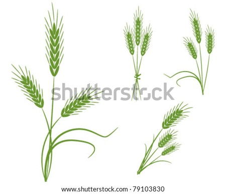 Spikes cereals - the concept of agriculture - stock vector
