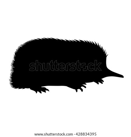Spiny anteaters