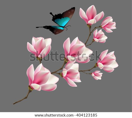 Spring background with blossom brunch of pink magnolia flowers and butterfly. Vector - stock vector