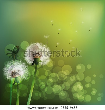 Spring background with white dandelion. Vector illustration - stock vector