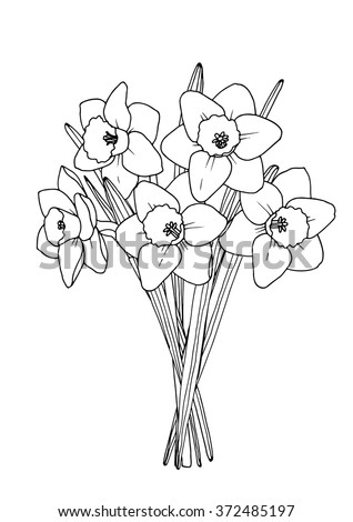 spring daffodil bouquet a4 printable coloring book page hand drawn illustration all