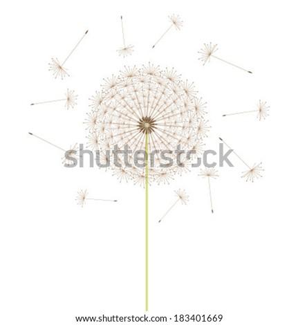 Spring dandelion flower. Vector illustration - stock vector