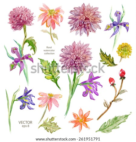Spring floral collection. watercolor beautiful flowers. vector illustration - stock vector