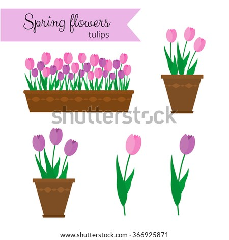 Spring flowers in long container and pots. Tulips isolated on white background.