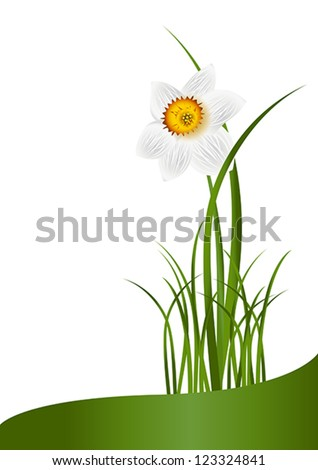 Spring Flowers. White narcissus and green grass on white background with space for your text. Vector eps10 illustration. Raster file included in portfolio - stock vector