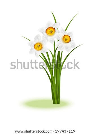 Spring Flowers. White narcissus on white background with space for your text. Vector eps10 illustration  - stock vector