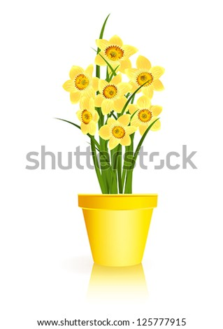 Spring Gardening. Yellow narcissus flowers in pot on white background. Vector eps10 illustration. Raster file included in portfolio - stock vector
